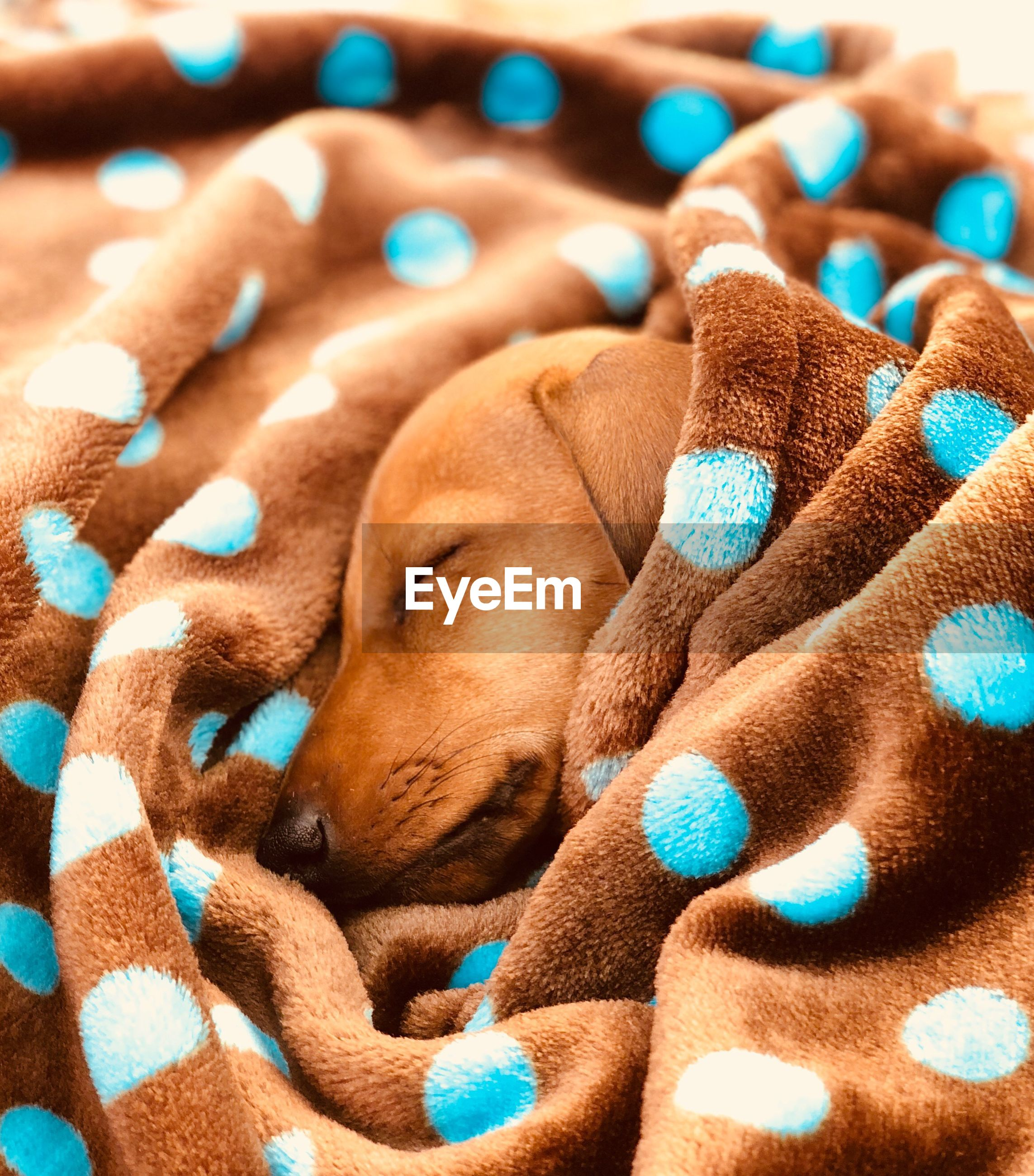 CLOSE-UP OF A DOG SLEEPING WITH COLORFUL TOY