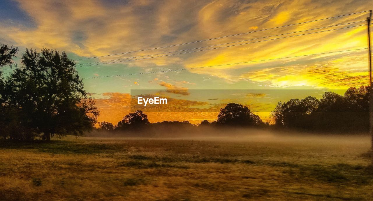tree, sunset, plant, sky, tranquility, beauty in nature, scenics - nature, tranquil scene, cloud - sky, landscape, environment, no people, nature, field, land, idyllic, non-urban scene, orange color, fog, outdoors, hazy