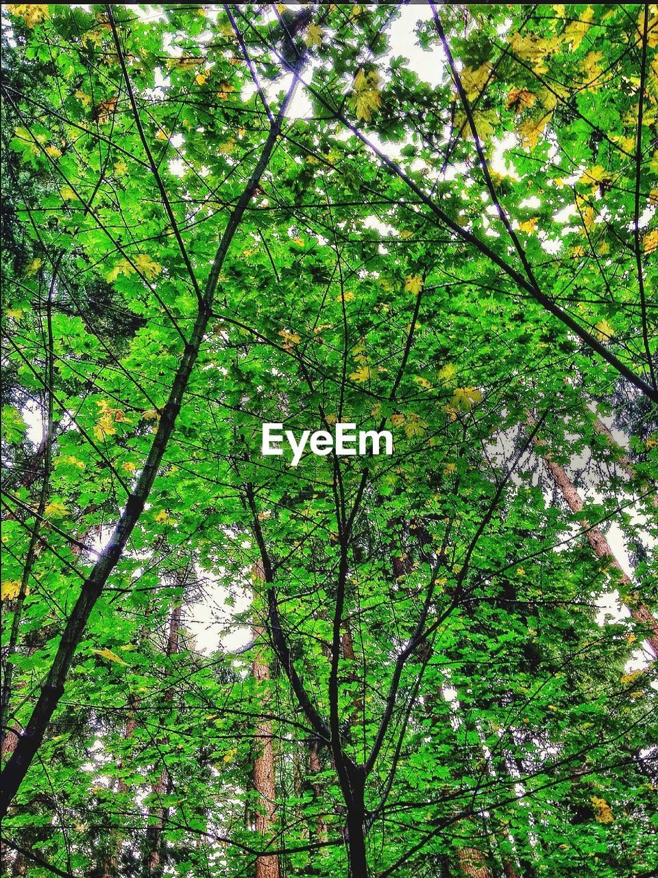 tree, growth, nature, branch, beauty in nature, green color, low angle view, forest, day, outdoors, tranquility, no people, flower, freshness