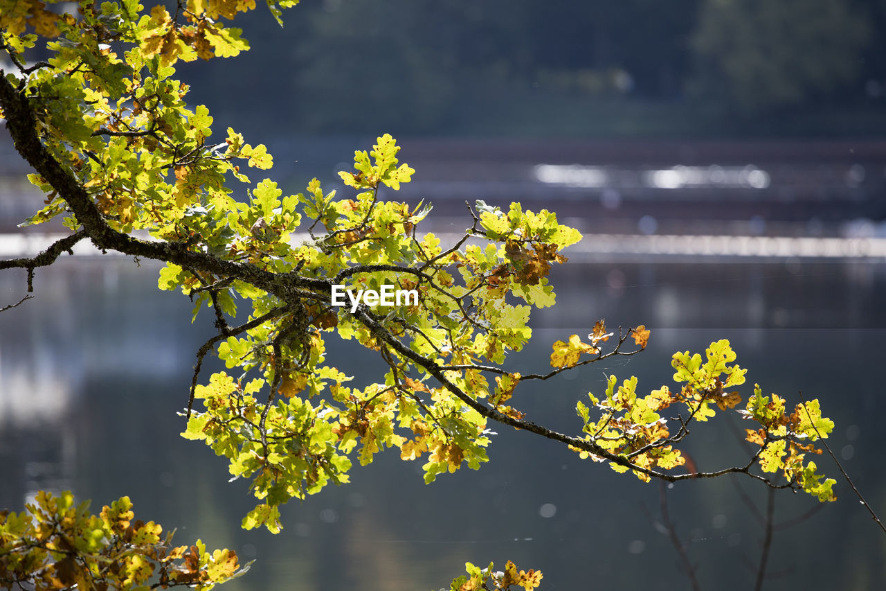 plant, growth, beauty in nature, water, tree, focus on foreground, yellow, nature, day, flowering plant, fragility, no people, flower, tranquility, vulnerability, branch, outdoors, lake, freshness