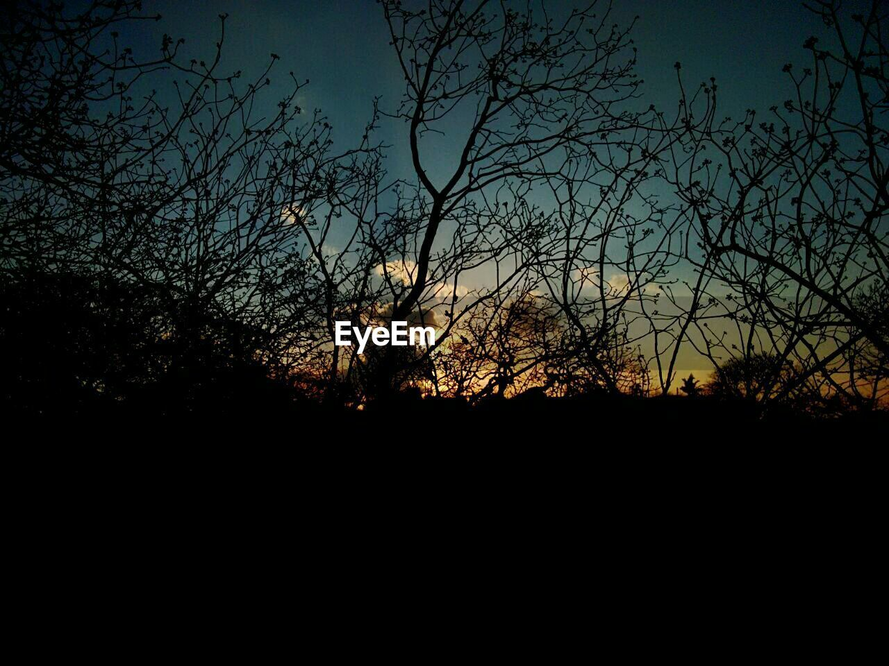 silhouette, beauty in nature, nature, dark, tranquility, tree, scenics, tranquil scene, bare tree, no people, moon, outdoors, sunset, branch, sky, night, astronomy