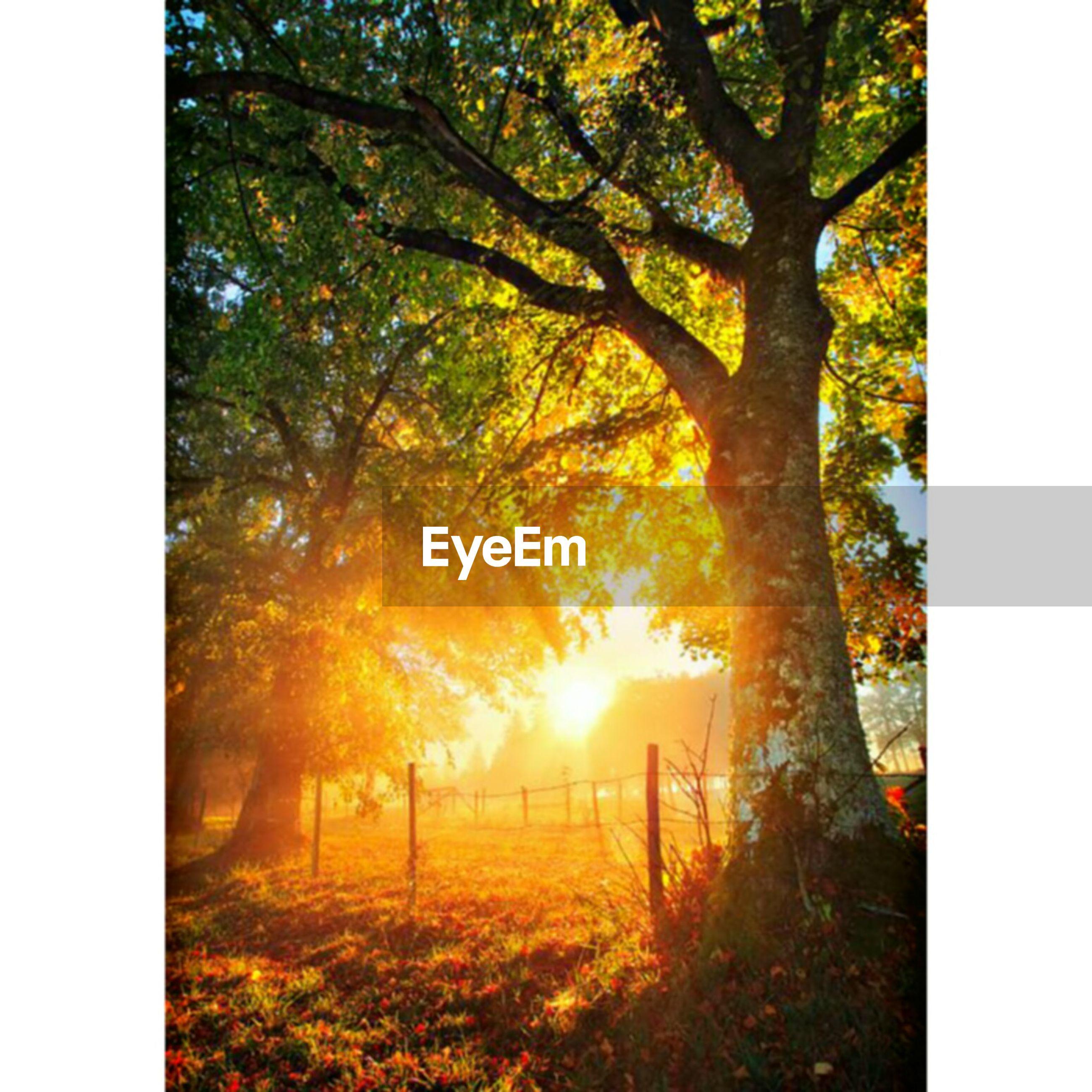 tree, nature, sunset, beauty in nature, sunlight, no people, idyllic, sun, grass, tranquility, outdoors, tranquil scene, scenics, autumn, growth, sunbeam, day, sky