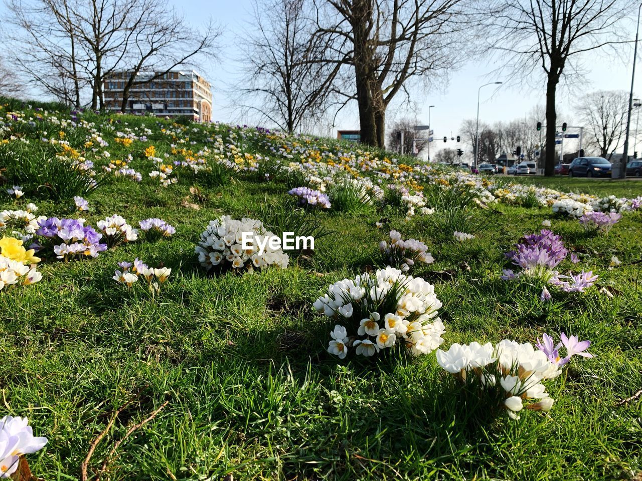plant, flowering plant, flower, freshness, beauty in nature, nature, vulnerability, building exterior, built structure, tree, fragility, architecture, growth, grass, day, park, no people, field, outdoors, park - man made space, flower head, springtime, flowerbed