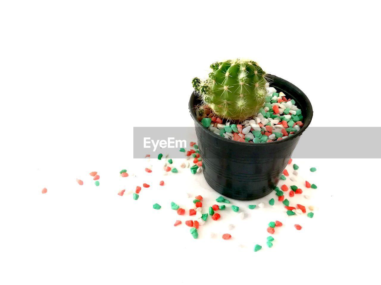 studio shot, white background, food, food and drink, copy space, indoors, no people, still life, indulgence, sweet food, sprinkles, freshness, sweet, cut out, multi colored, close-up, green color, high angle view, temptation, wellbeing
