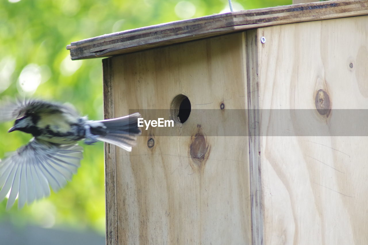 LOW ANGLE VIEW OF A BIRD FLYING IN A WOODEN