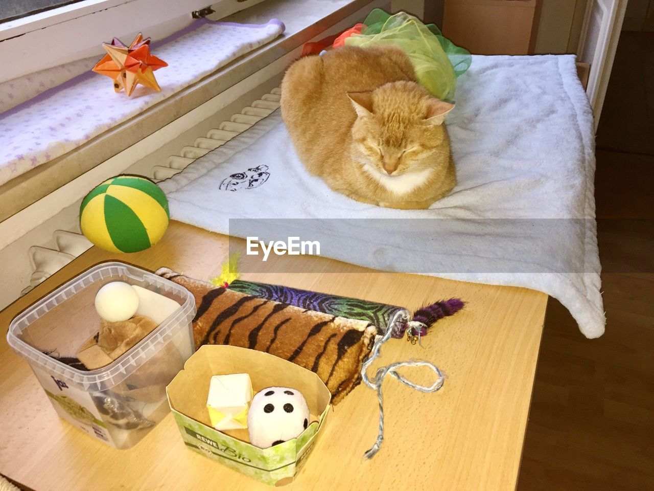 domestic cat, indoors, pets, domestic animals, mammal, one animal, animal themes, feline, high angle view, no people, table, whisker, stuffed toy, day