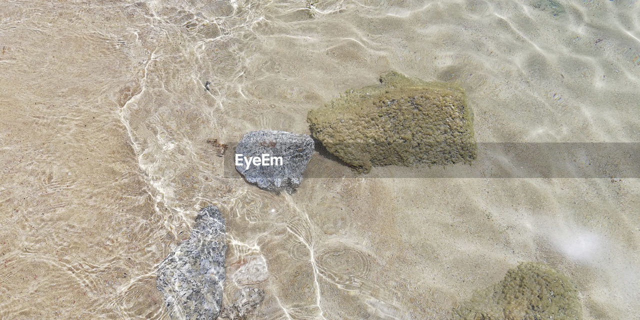 land, high angle view, nature, water, sand, beach, no people, day, outdoors, solid, sea, rock, rock - object, sunlight, close-up, animal, pattern, waterfront, rippled, shallow, purity