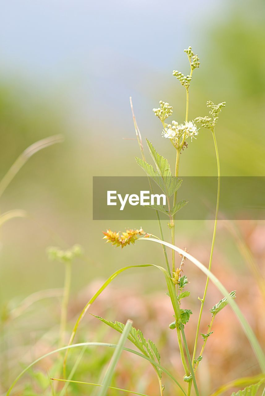 plant, growth, flowering plant, flower, beauty in nature, fragility, vulnerability, close-up, nature, focus on foreground, day, no people, field, freshness, land, plant stem, selective focus, green color, outdoors, sunlight, flower head
