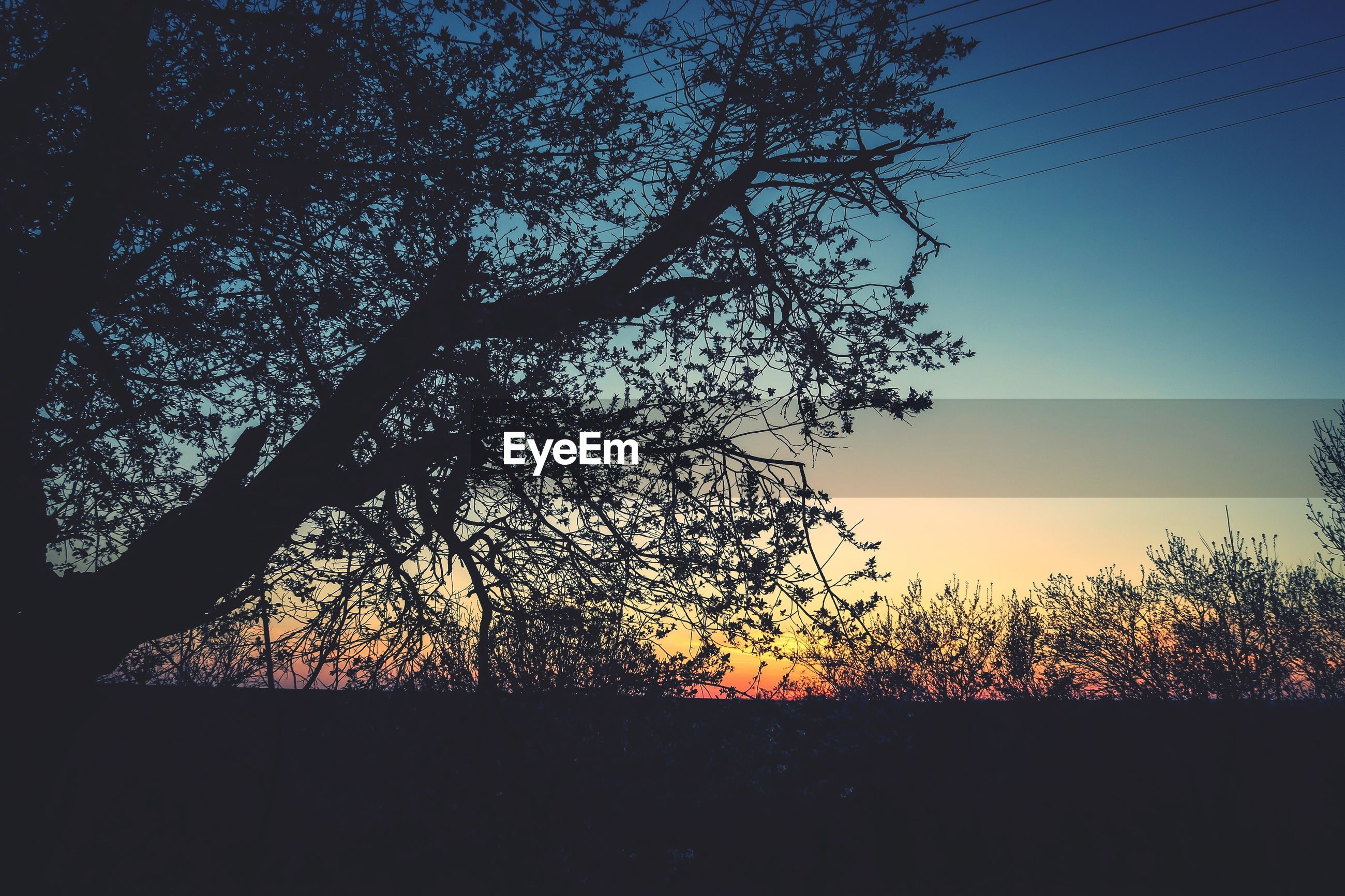 silhouette, tree, sunset, tranquility, branch, nature, beauty in nature, scenics, tranquil scene, bare tree, clear sky, low angle view, sky, growth, sunlight, landscape, field, outdoors, idyllic, no people