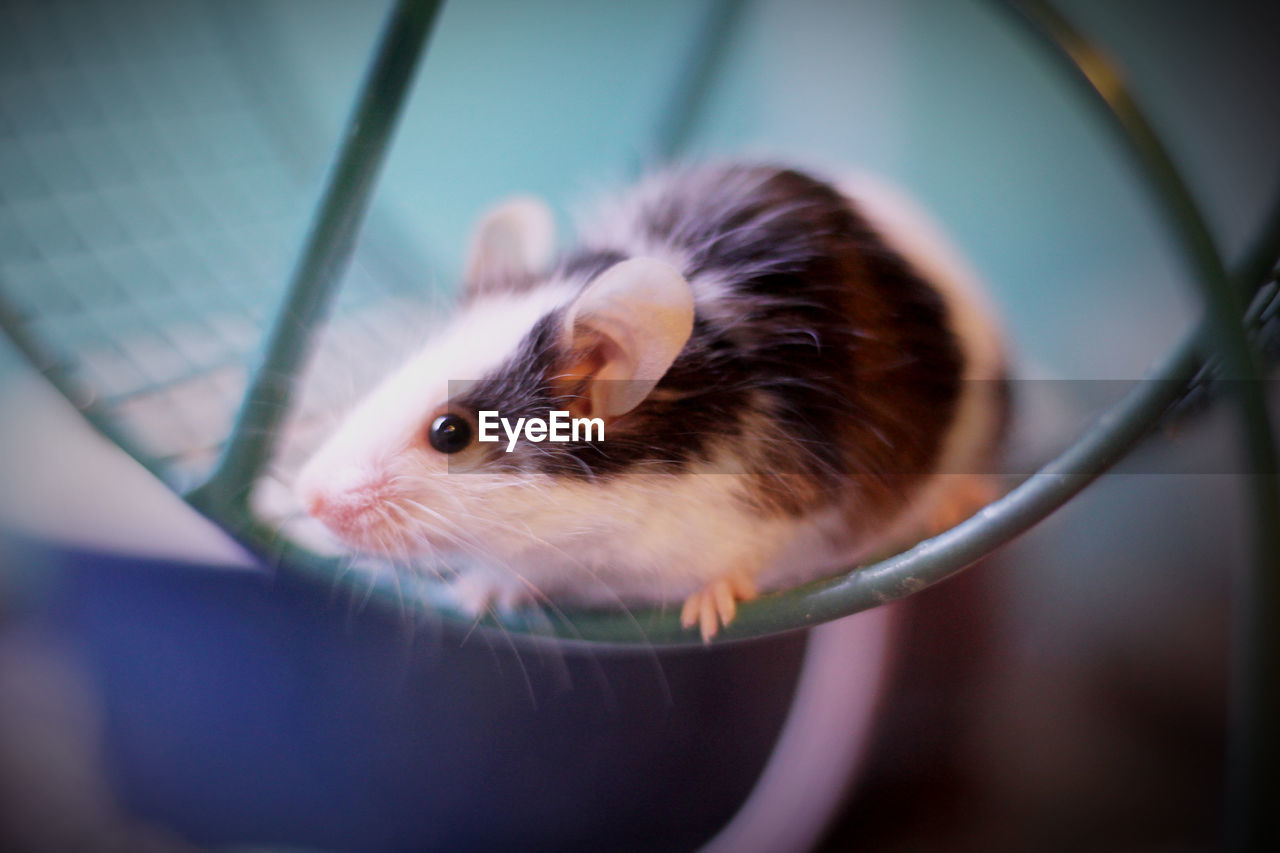 animal themes, animal, mammal, pets, domestic, one animal, rodent, close-up, selective focus, vertebrate, domestic animals, animal wildlife, hamster, indoors, no people, animal body part, container, portrait, focus on foreground, cute, animal head, whisker