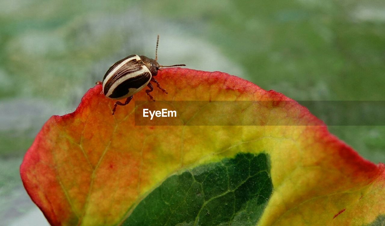 Close-Up Of Bug On Colorful Leaf