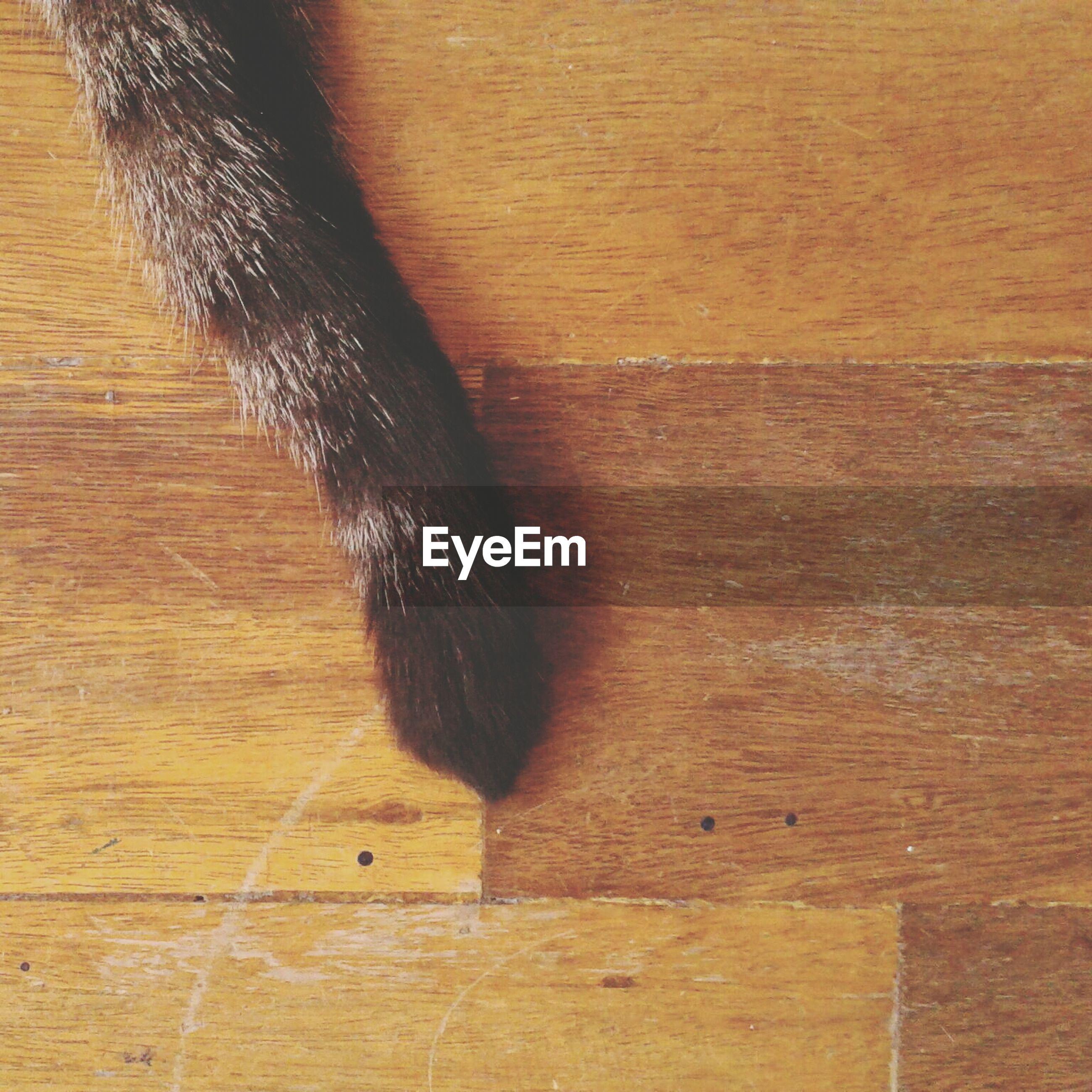 Cat's tail on hardwood floor