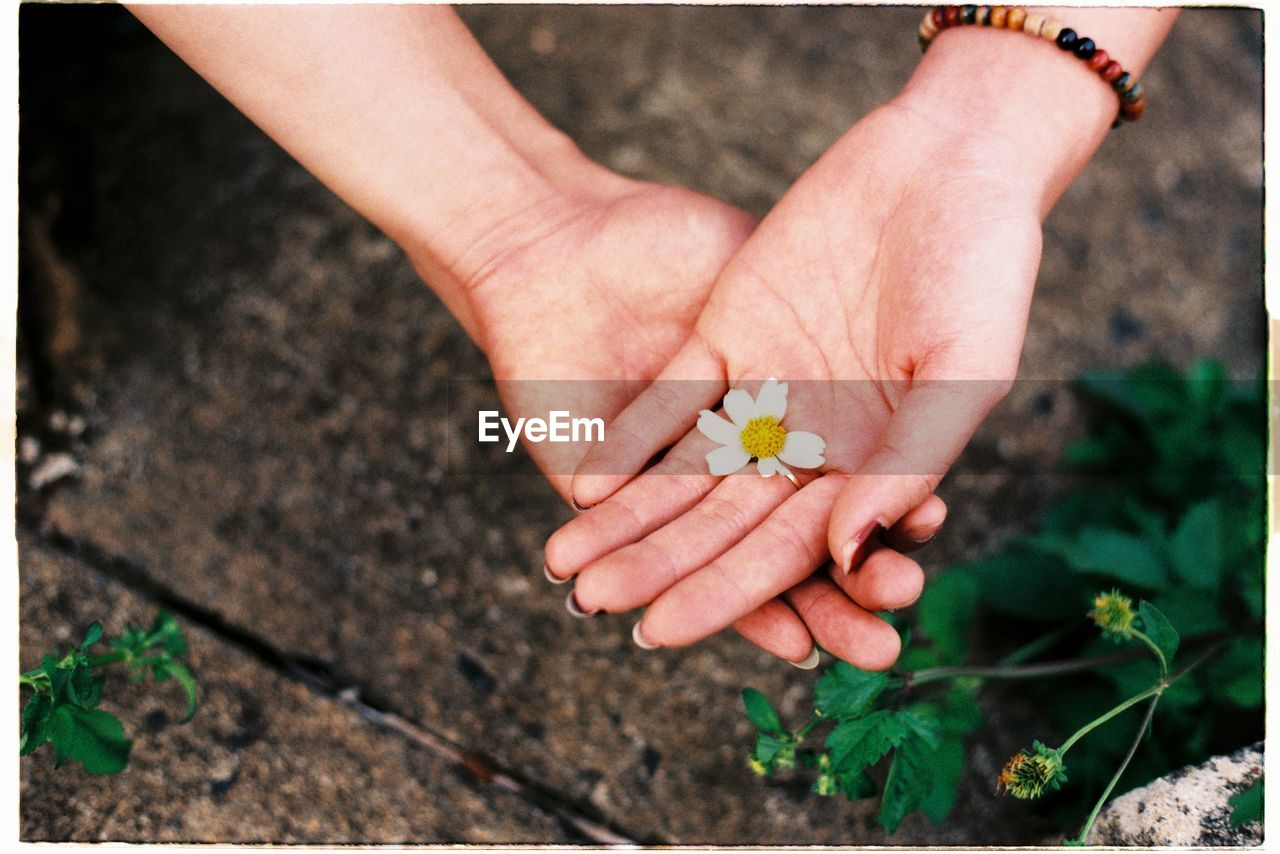 Close-up of hands holding flower