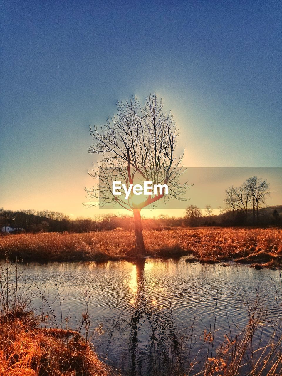 tranquility, tranquil scene, bare tree, tree, beauty in nature, sunset, nature, lone, majestic, tree trunk, scenics, lake, non-urban scene, remote, reflection, solitude, branch, outdoors, landscape, silhouette, clear sky, water, no people, sky, day
