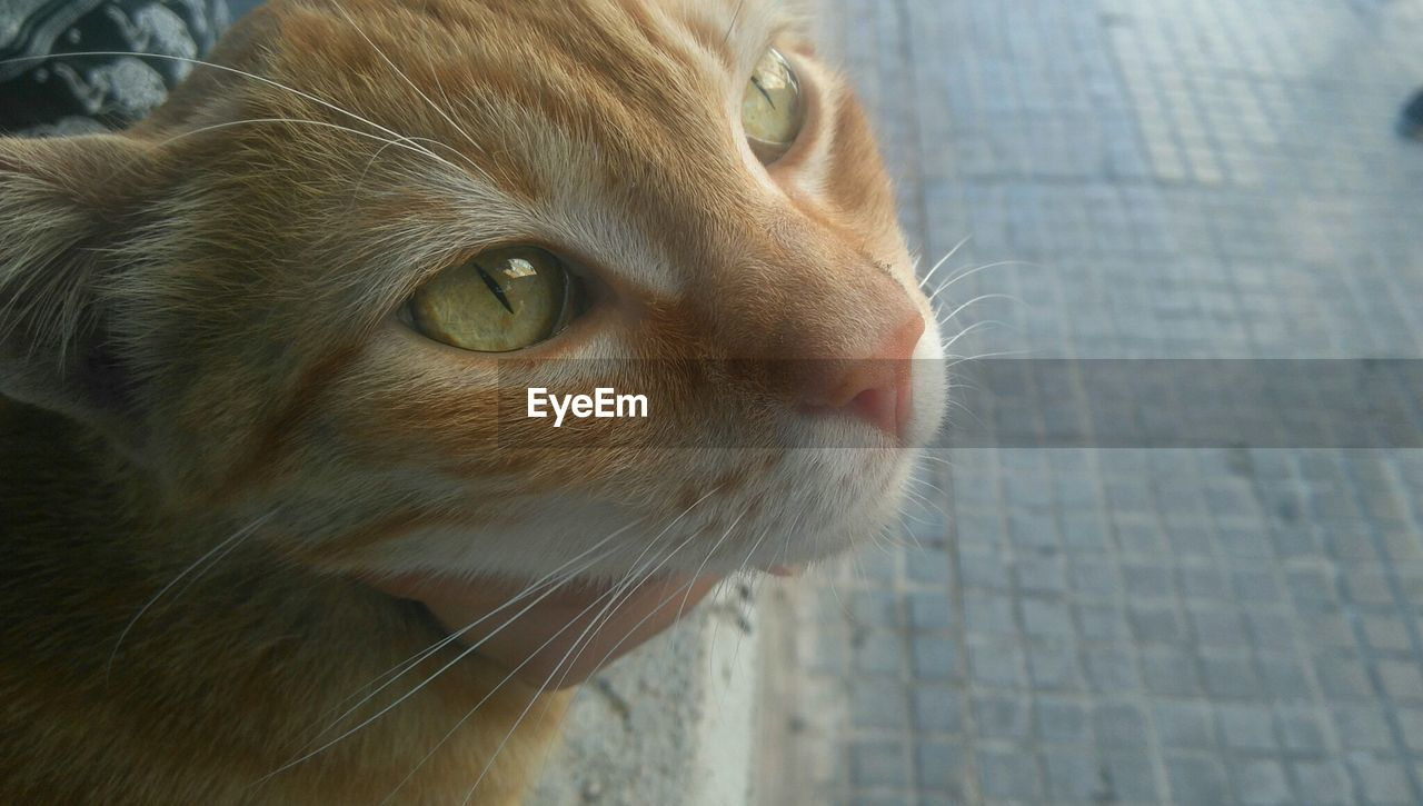 animal themes, animal, mammal, one animal, domestic animals, domestic, pets, vertebrate, cat, close-up, domestic cat, feline, looking away, animal body part, looking, no people, whisker, animal head, focus on foreground, day, animal eye, ginger cat, snout