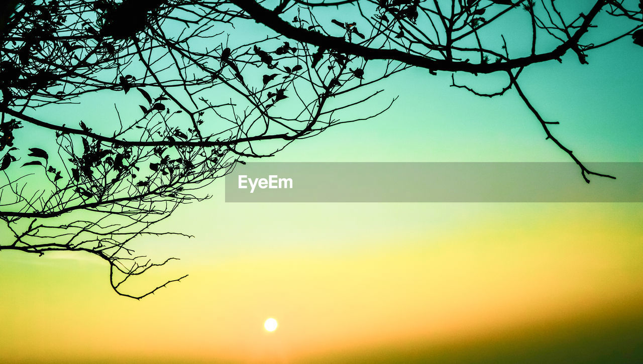 tree, sky, branch, beauty in nature, plant, sunset, tranquility, nature, scenics - nature, silhouette, bare tree, tranquil scene, no people, low angle view, outdoors, sun, orange color, clear sky, growth, idyllic