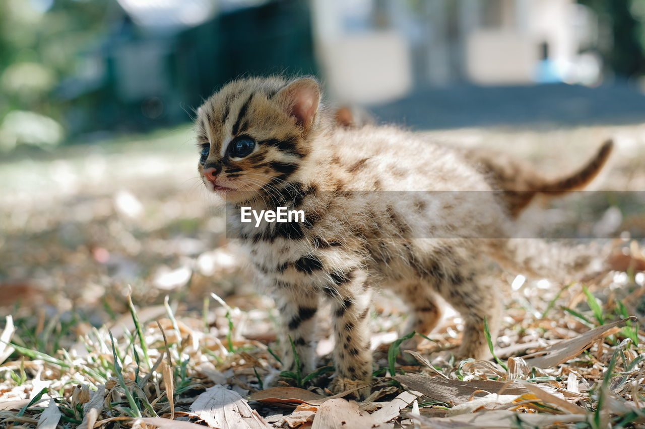 animal themes, animal, one animal, mammal, no people, land, day, animal wildlife, vertebrate, focus on foreground, field, animals in the wild, nature, close-up, domestic animals, young animal, selective focus, pets, sunlight, looking, whisker