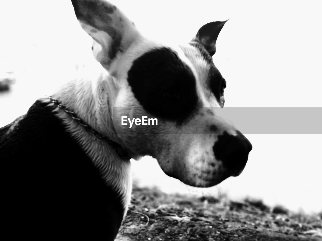 dog, pets, domestic animals, one animal, mammal, animal themes, close-up, no people, day, outdoors, nature