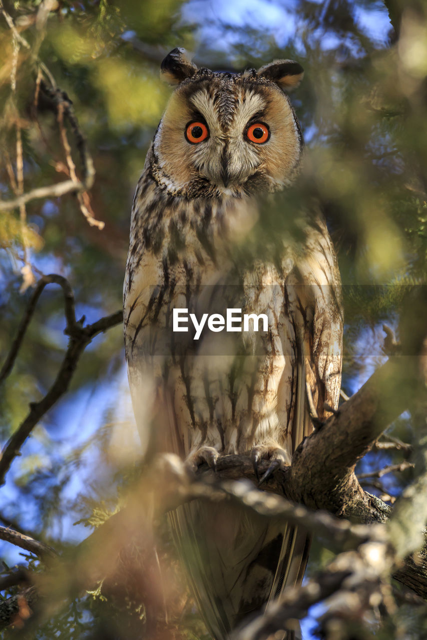 animal themes, tree, animal, bird, animal wildlife, bird of prey, animals in the wild, vertebrate, one animal, owl, branch, looking at camera, plant, portrait, perching, day, nature, low angle view, selective focus, no people, outdoors, yellow eyes, eagle