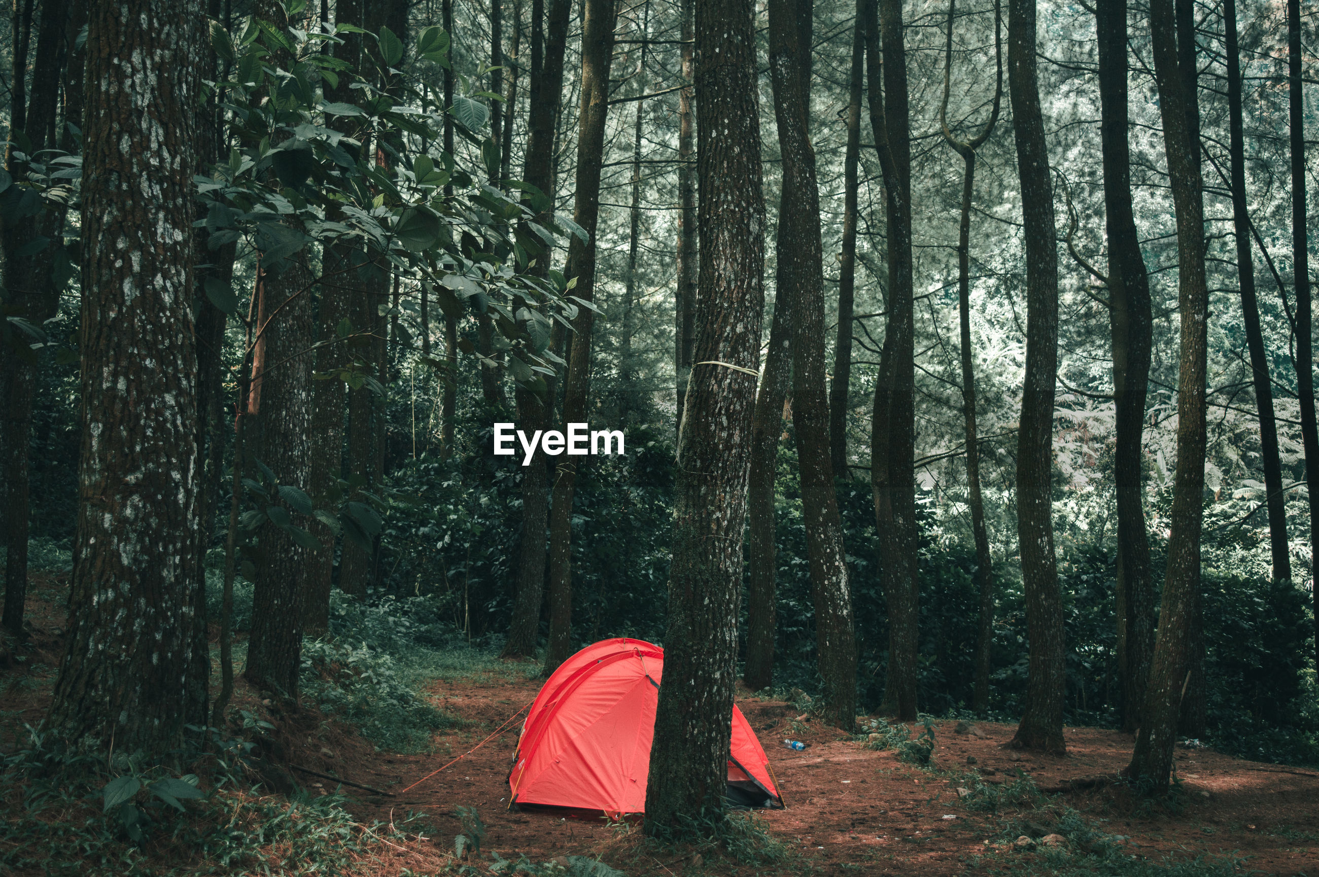 Red tent on field in forest
