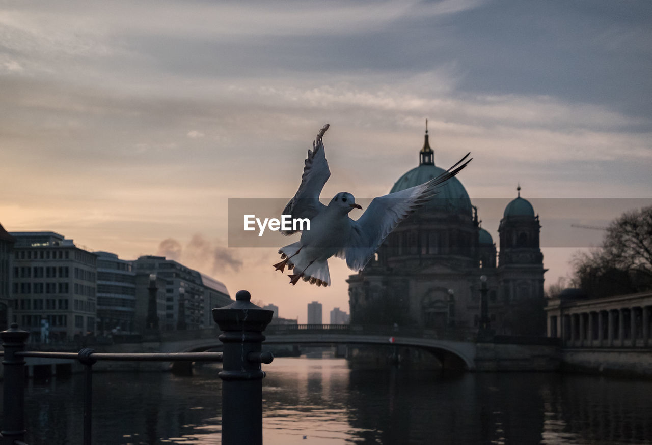 Low angle view of seagull over river in city against sky at dusk