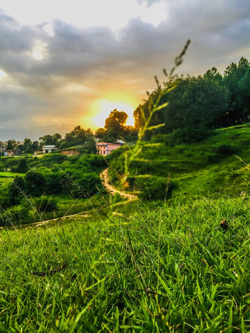 plant, sky, beauty in nature, green color, landscape, tranquility, growth, cloud - sky, tranquil scene, environment, scenics - nature, land, field, nature, sunset, tree, grass, no people, rural scene, sunlight, outdoors