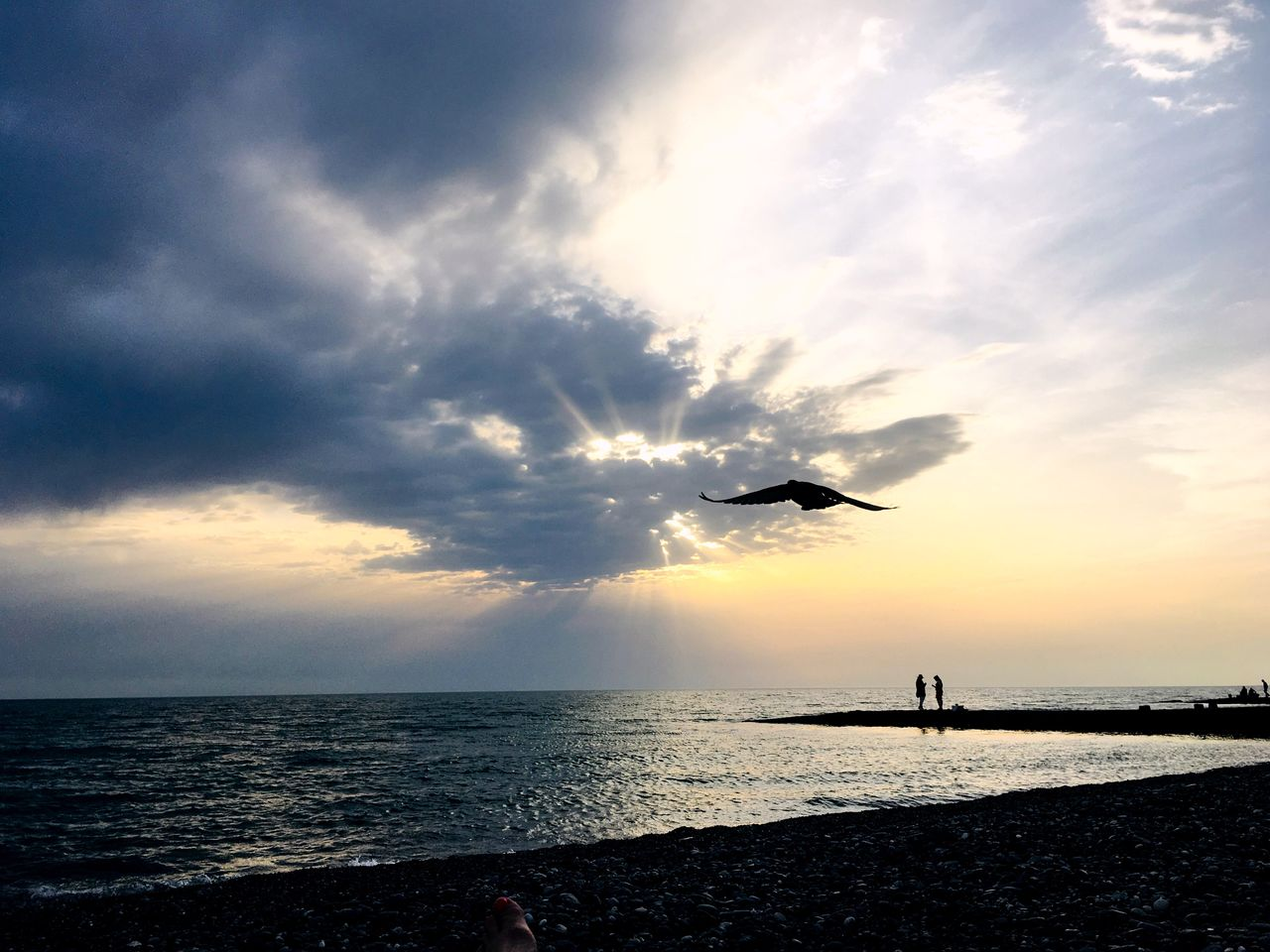 sky, water, sea, cloud - sky, horizon over water, sunset, horizon, scenics - nature, beauty in nature, silhouette, nature, animal themes, flying, animal, one animal, land, tranquil scene, beach, tranquility, outdoors, sun