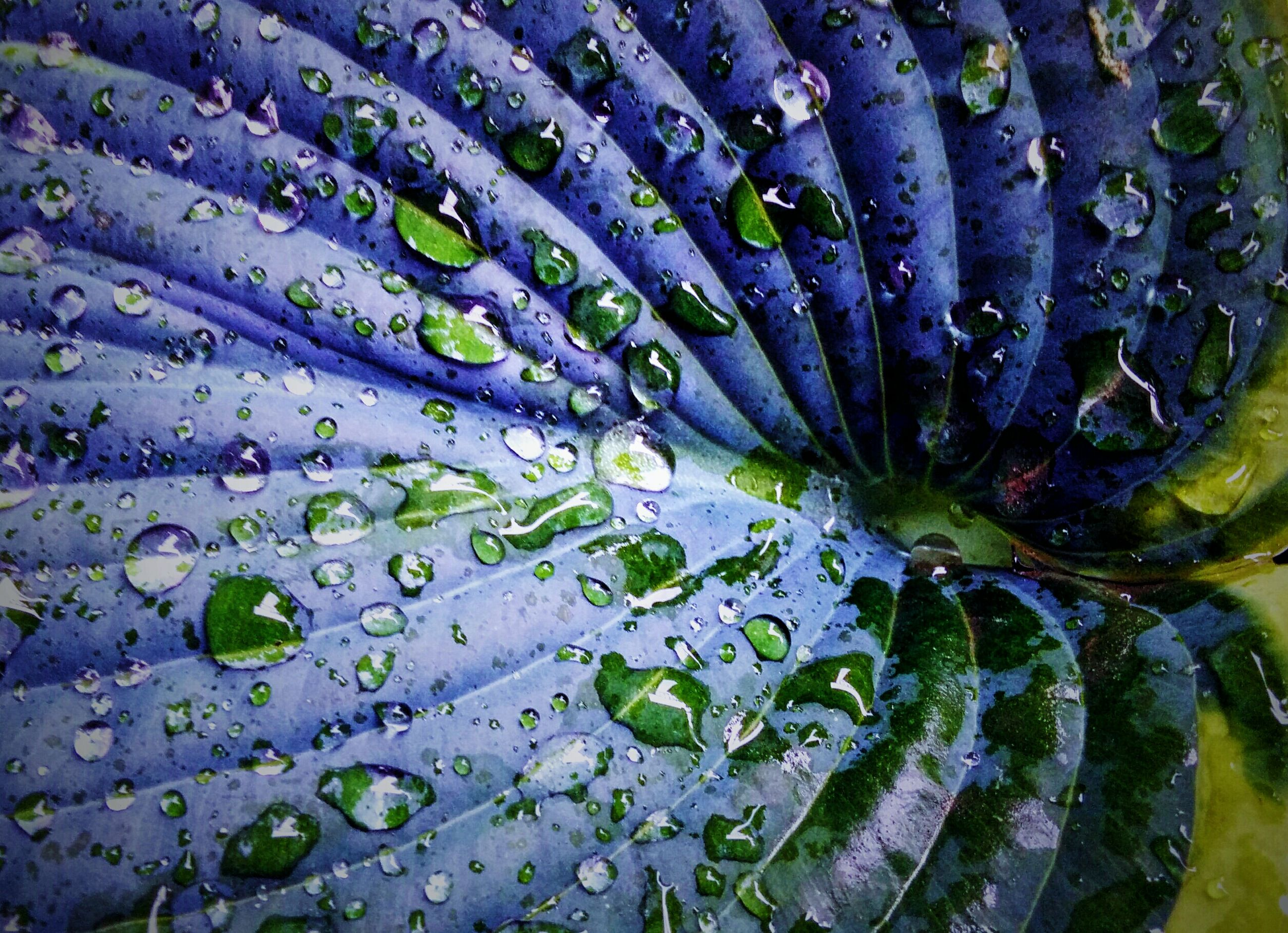 water, full frame, backgrounds, drop, wet, freshness, leaf, green color, close-up, fragility, pattern, high angle view, nature, beauty in nature, natural pattern, growth, detail, plant, no people, outdoors
