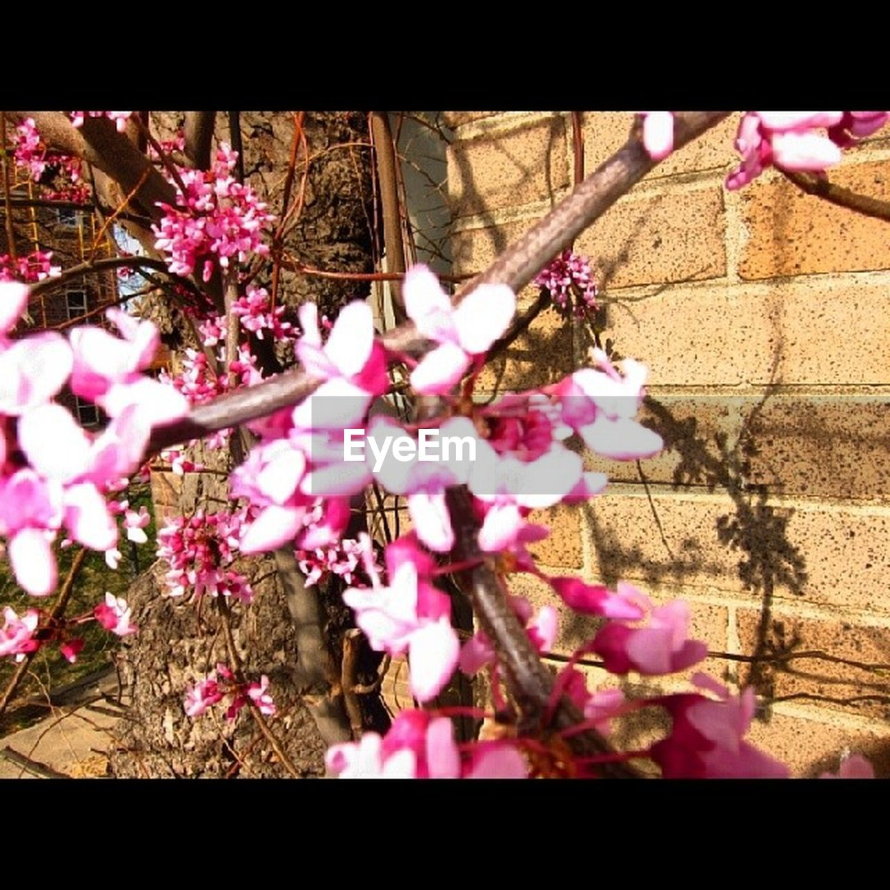 flower, pink color, growth, fragility, blossom, tree, beauty in nature, nature, no people, petal, pink, springtime, branch, blooming, day, freshness, outdoors, close-up, flower head
