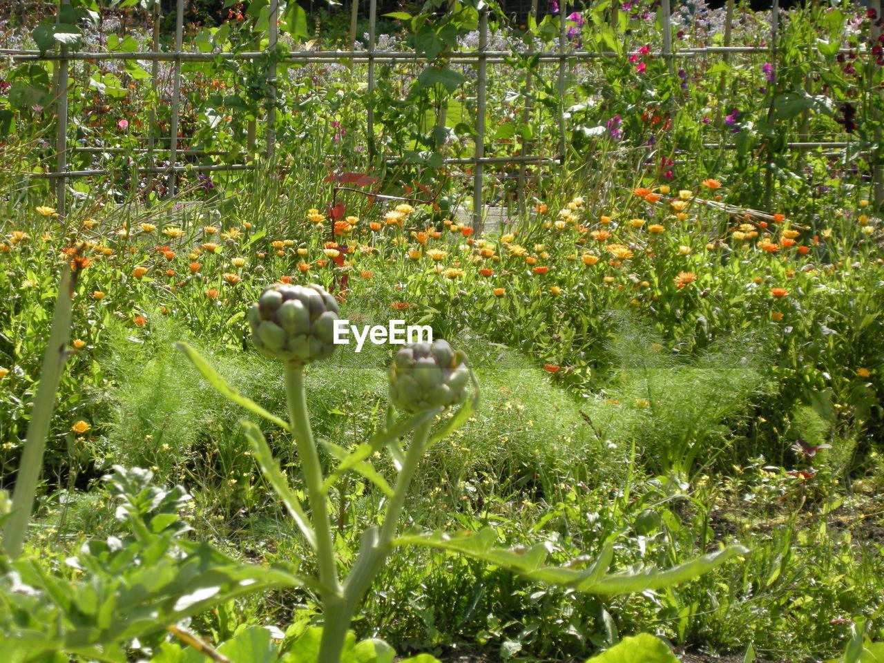 Flowers growing in botanical garden
