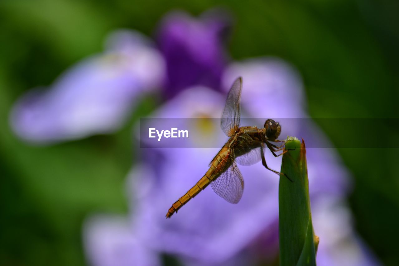 flower, flowering plant, insect, invertebrate, animals in the wild, animal wildlife, plant, animal, animal themes, one animal, beauty in nature, growth, close-up, focus on foreground, fragility, vulnerability, no people, nature, day, petal, purple, flower head, outdoors, pollination