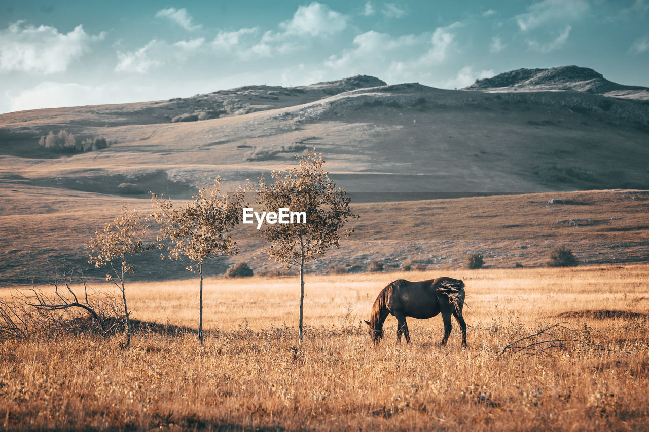 Horse grazing field against mountains
