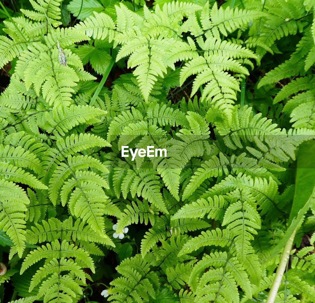 green color, growth, plant, leaf, plant part, fern, no people, full frame, day, backgrounds, nature, foliage, beauty in nature, lush foliage, close-up, outdoors, tree, freshness, high angle view, tranquility, rainforest, leaves