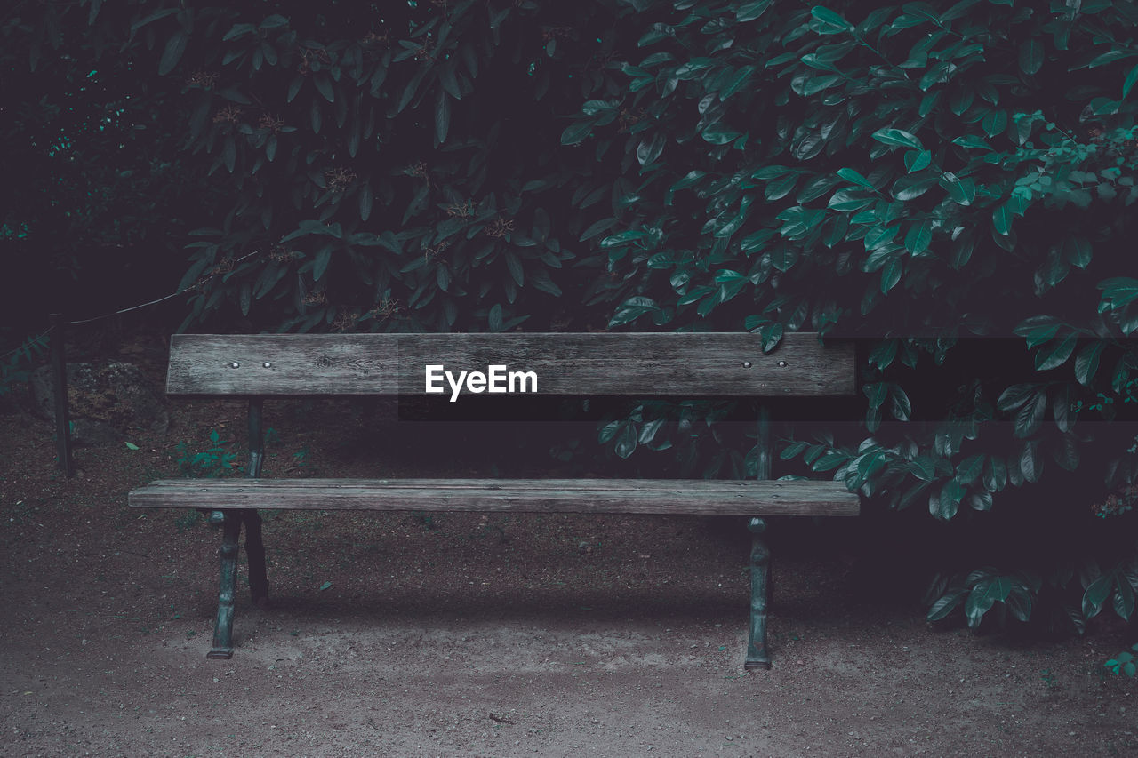 bench, seat, empty, park, plant, no people, wood - material, absence, park bench, day, nature, park - man made space, outdoors, relaxation, land, growth, tree, green color, grass, footpath