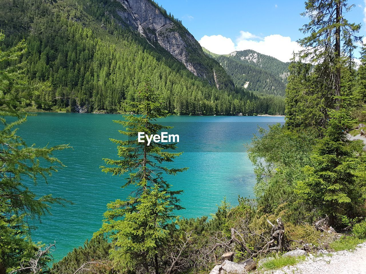 water, plant, beauty in nature, tranquility, scenics - nature, tranquil scene, tree, mountain, green color, lake, growth, nature, non-urban scene, no people, idyllic, day, sky, forest, land, outdoors, coniferous tree