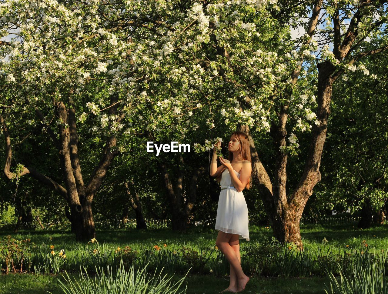 Full length of young woman standing by flowering tree on field
