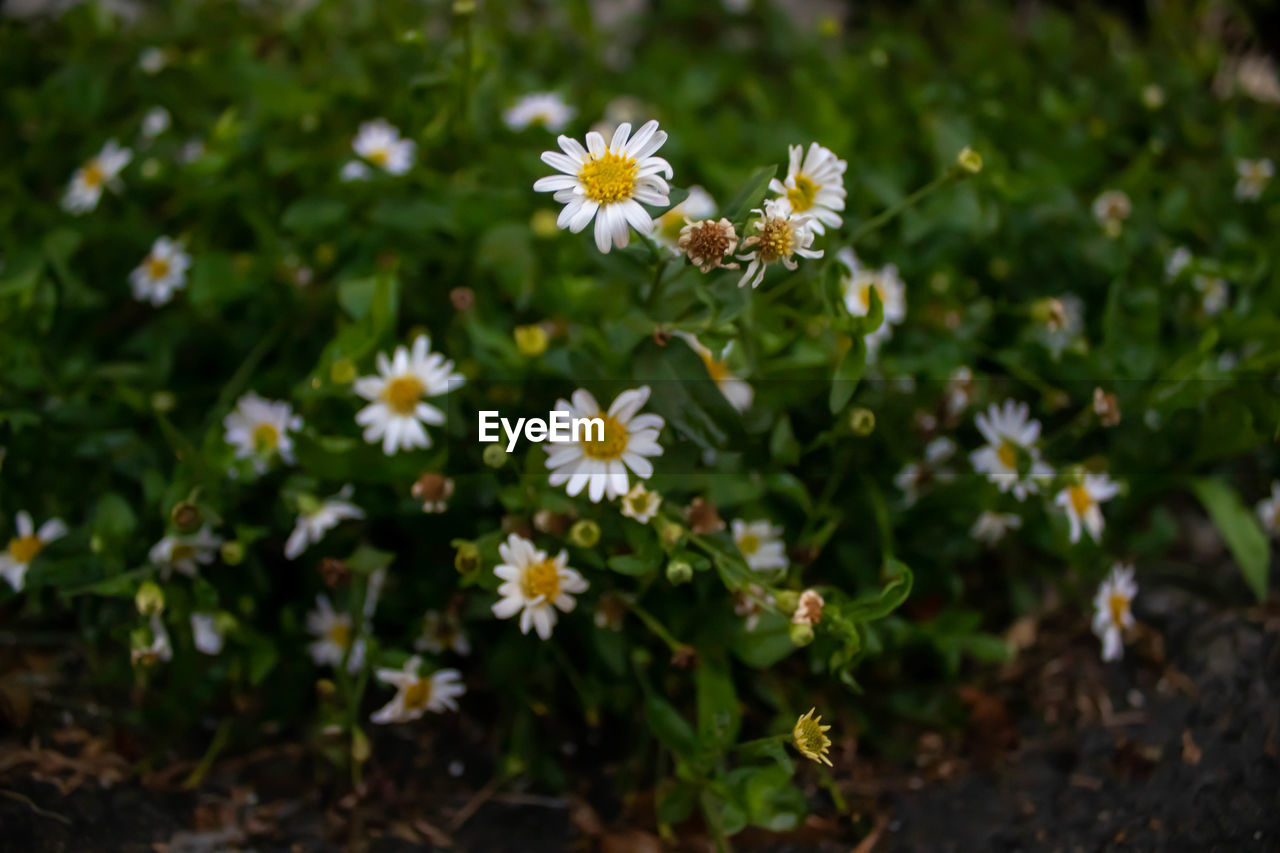 flowering plant, flower, plant, fragility, beauty in nature, freshness, vulnerability, growth, petal, flower head, inflorescence, nature, close-up, focus on foreground, day, no people, field, land, selective focus, outdoors, pollen