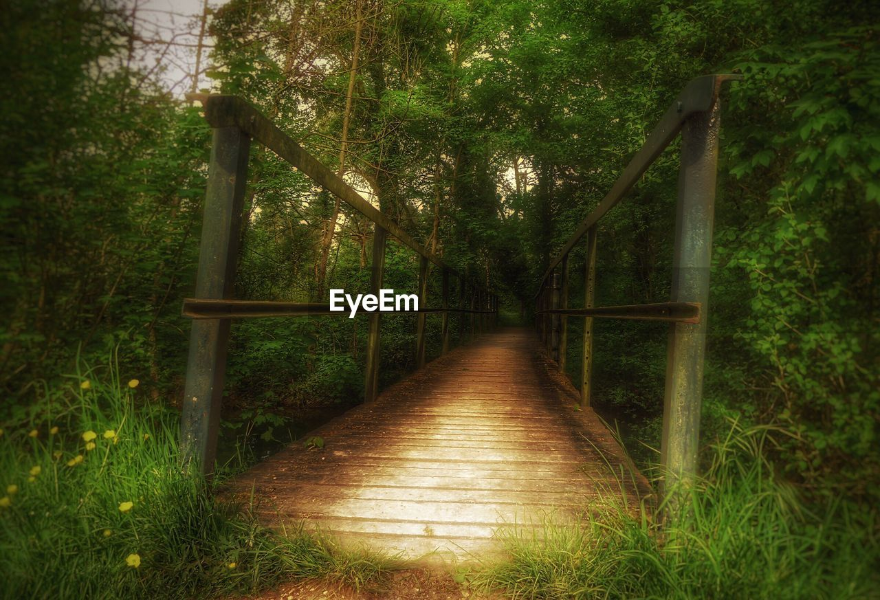 the way forward, railing, nature, outdoors, tree, no people, tranquility, growth, day, bridge - man made structure, grass, beauty in nature, footbridge, wood paneling