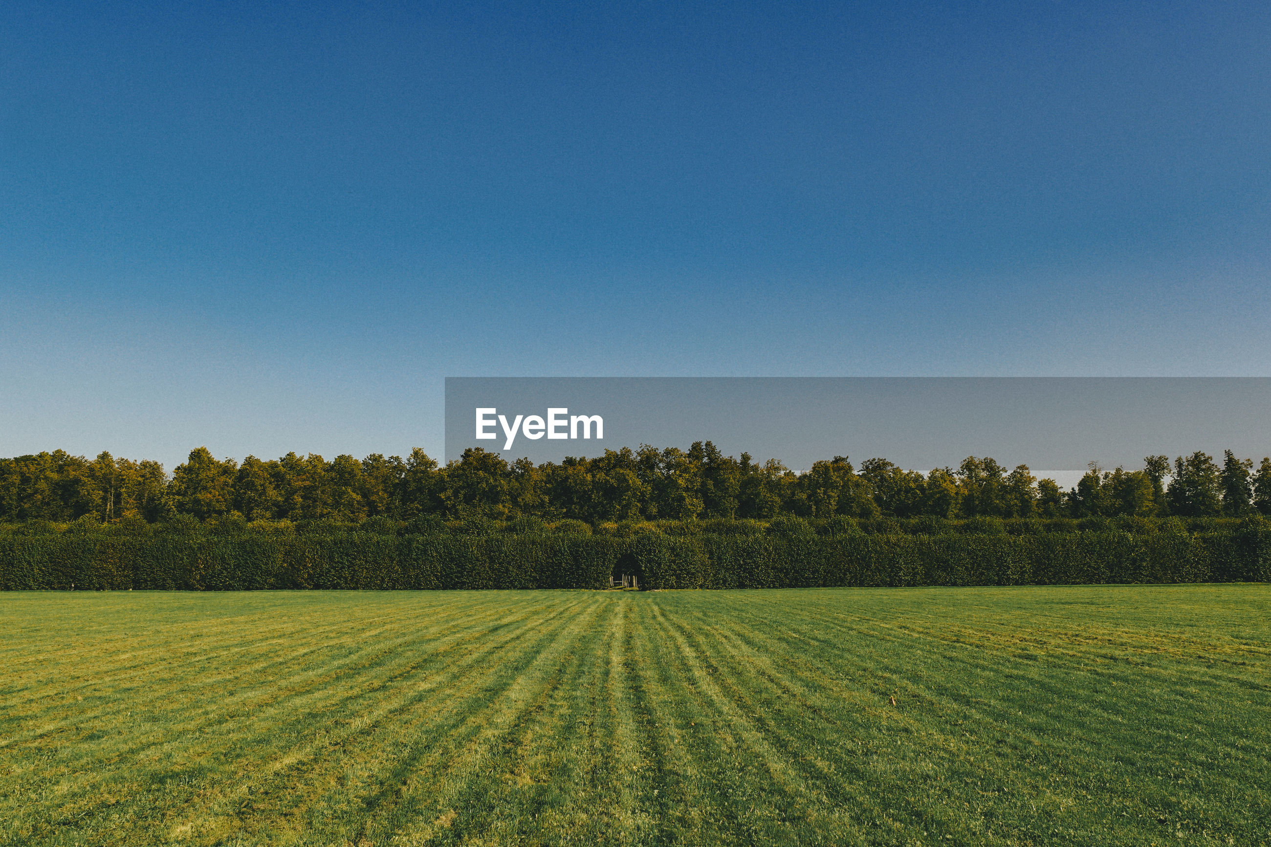 Scenic view of grassy landscape against clear sky
