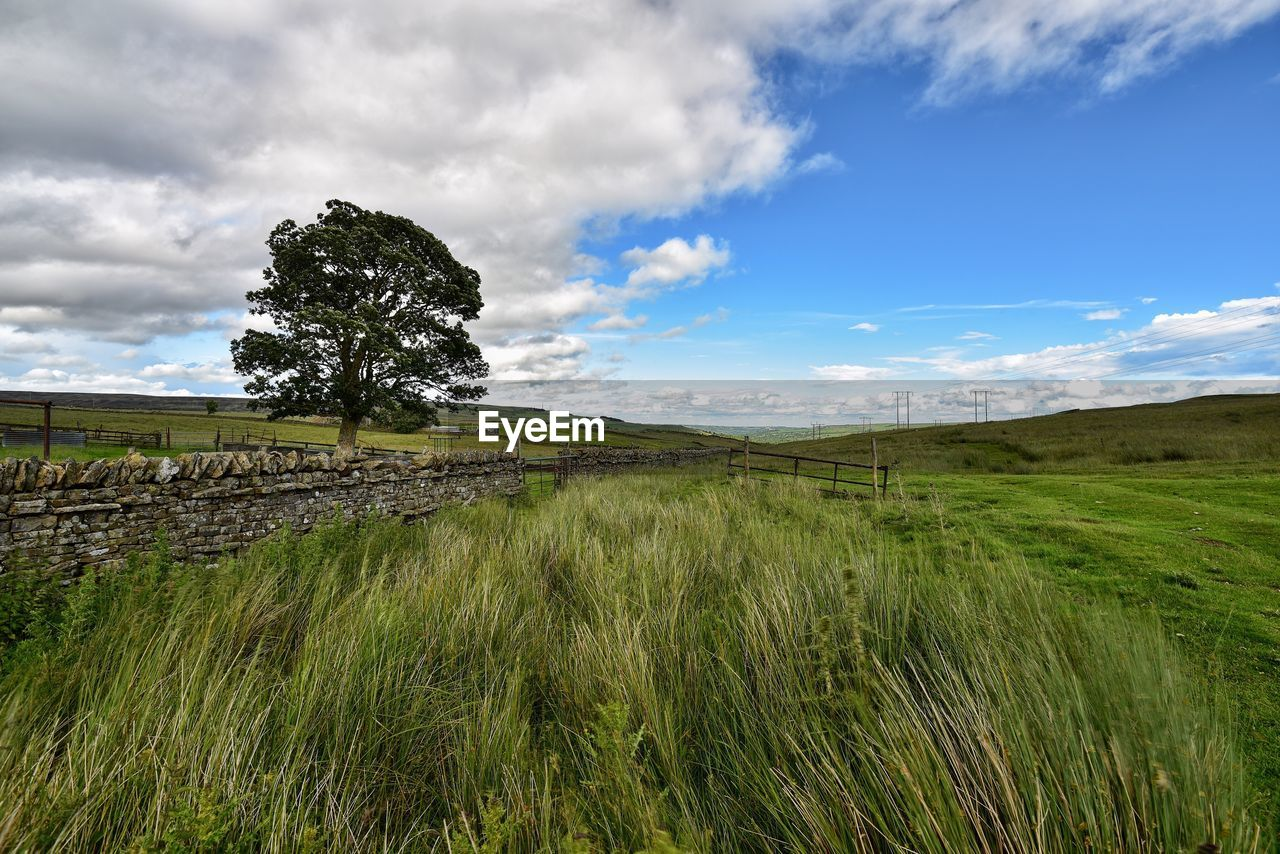 Grass growing on field by tree against sky