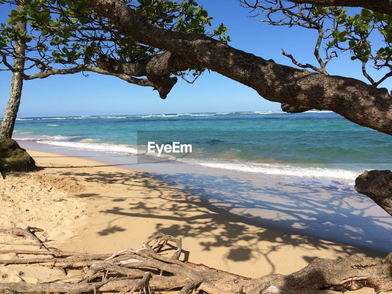 sea, nature, beach, beauty in nature, shore, tree, scenics, water, sand, sunlight, day, tranquility, horizon over water, outdoors, branch, tranquil scene, no people, sky, wave