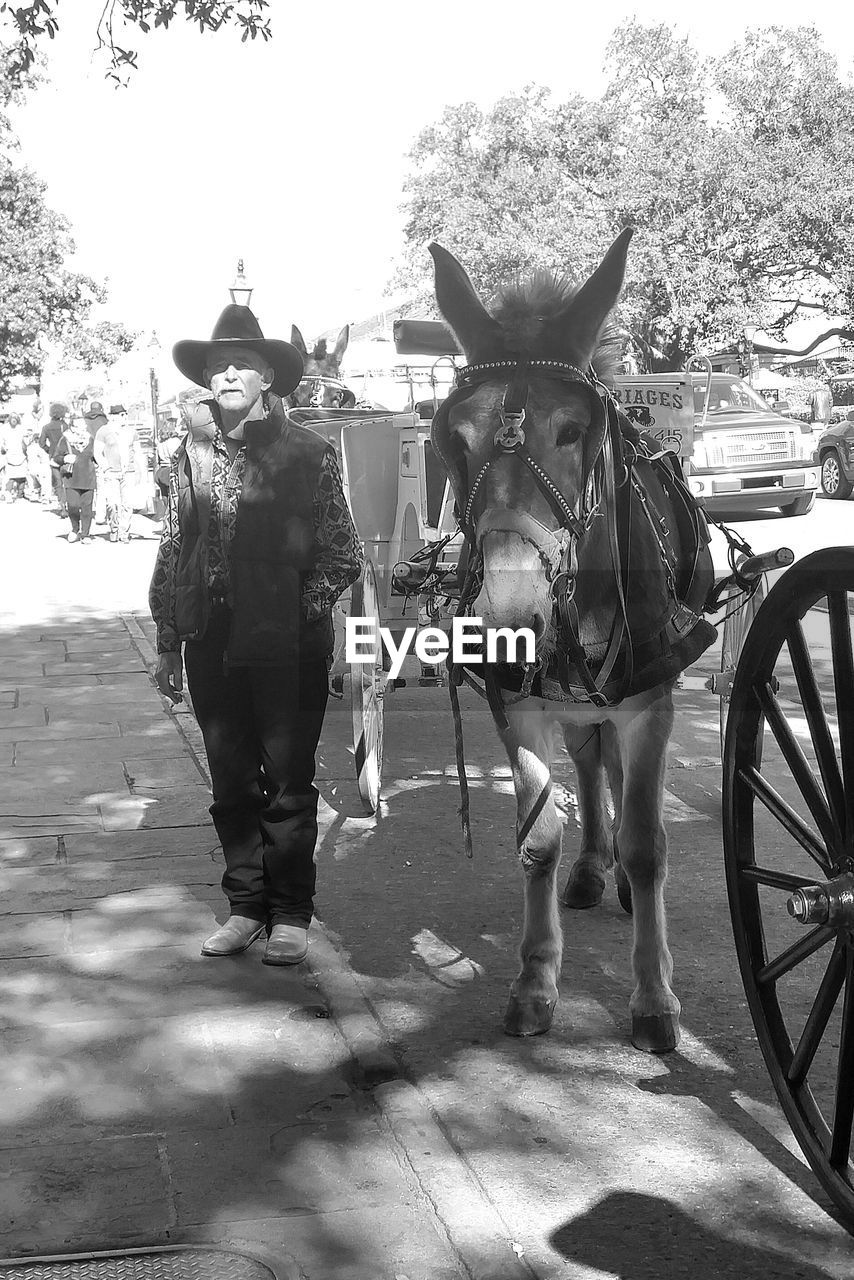 horse, mammal, domestic animals, transportation, men, livestock, horse cart, outdoors, day, real people, one person, shadow, standing, people