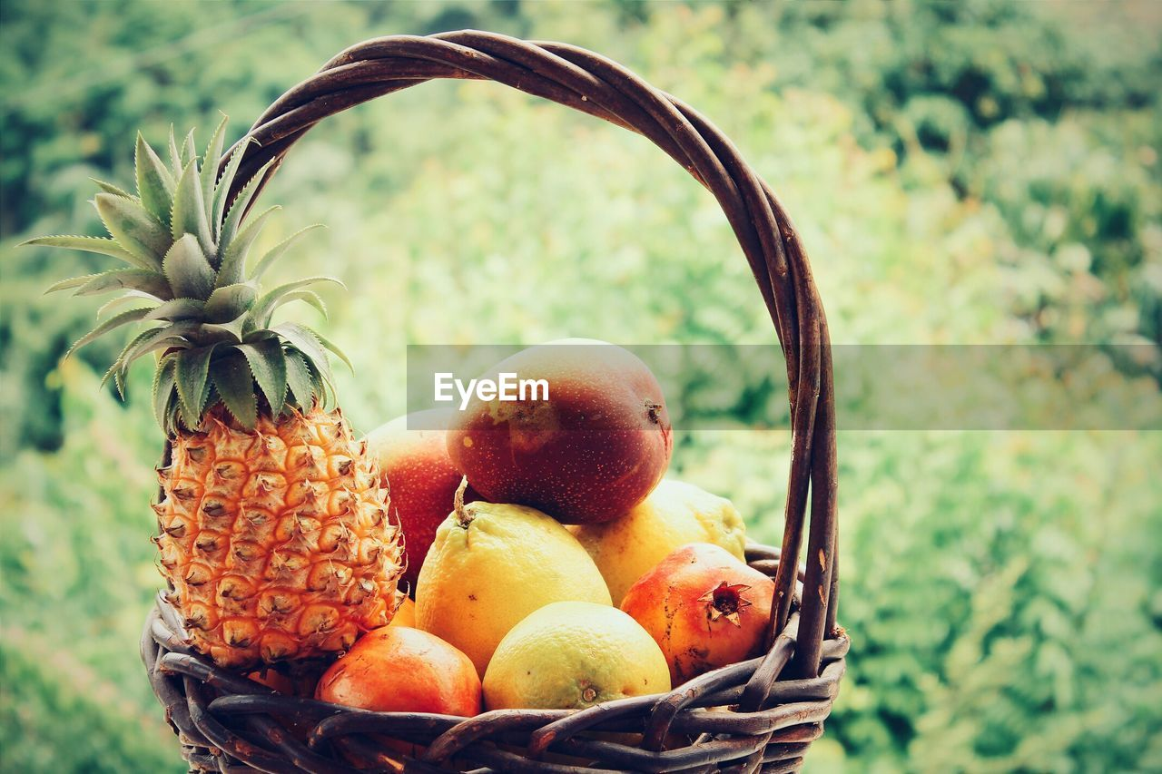 Close-Up Of Fruits In Wicker Basket Against Trees