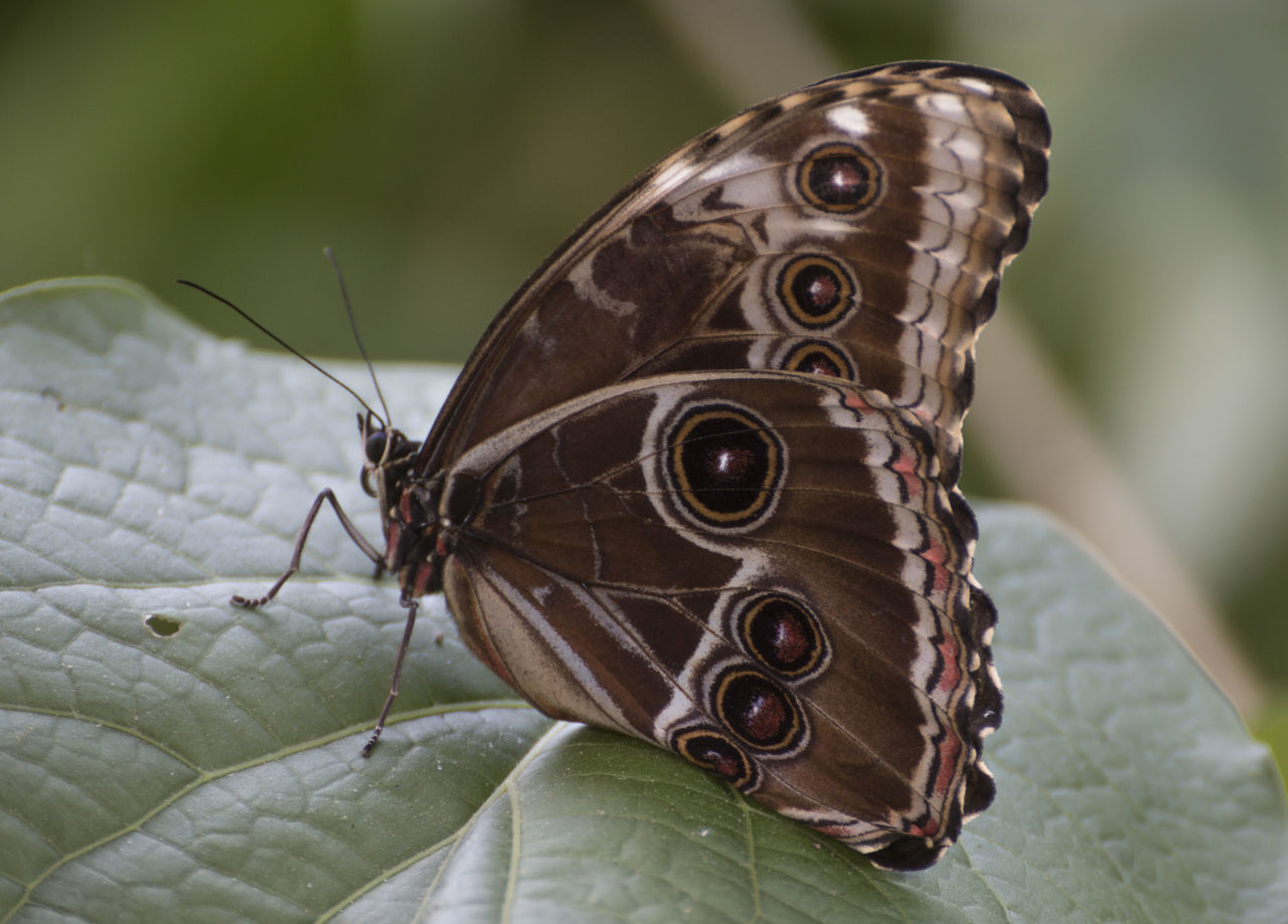 one animal, insect, animal themes, animals in the wild, close-up, no people, animal wildlife, focus on foreground, butterfly - insect, nature, day, outdoors