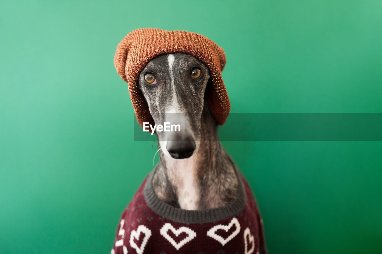 Close-up portrait of dog wearing sweater and knit hat against green background