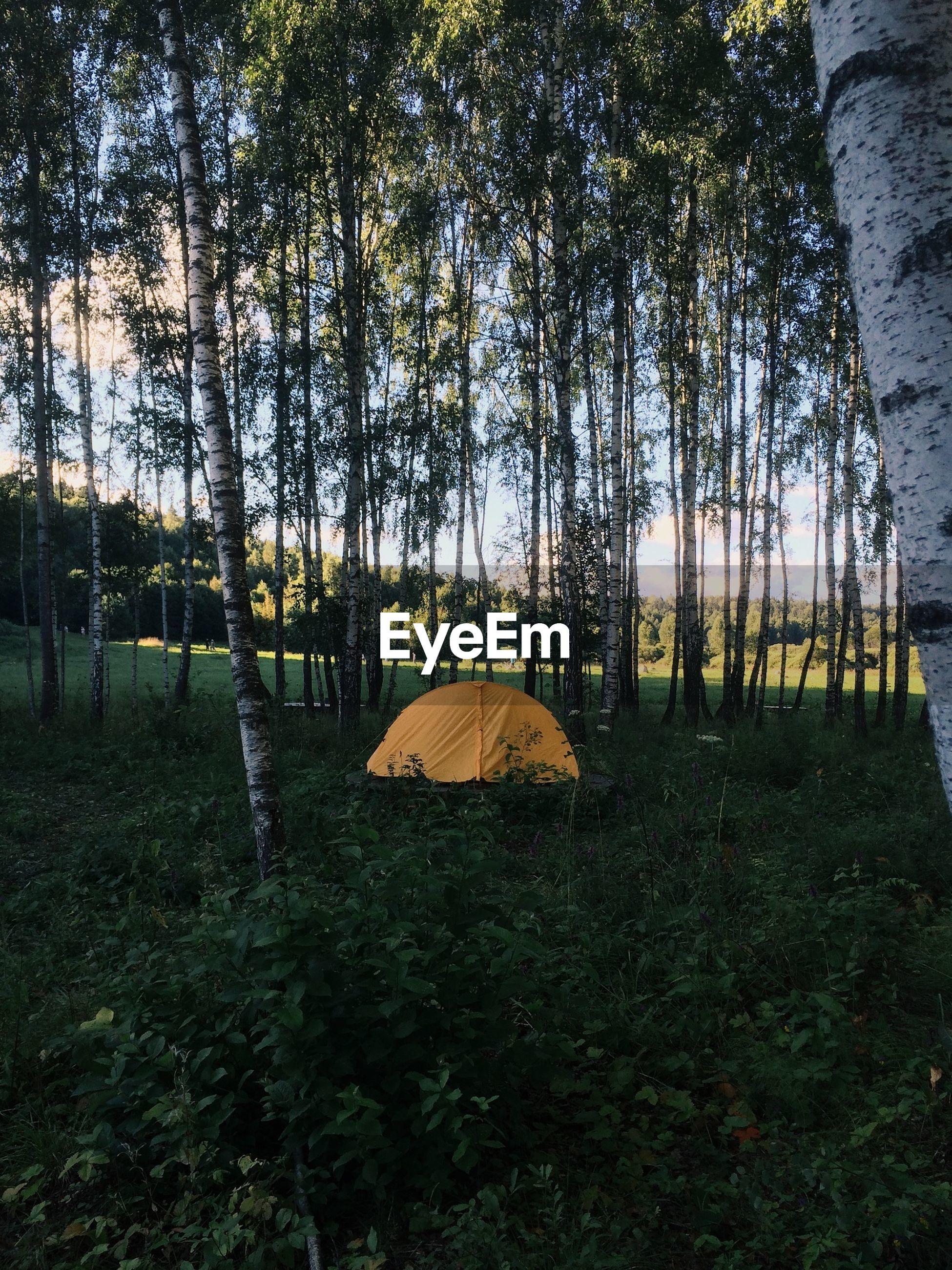Orange tent in forest