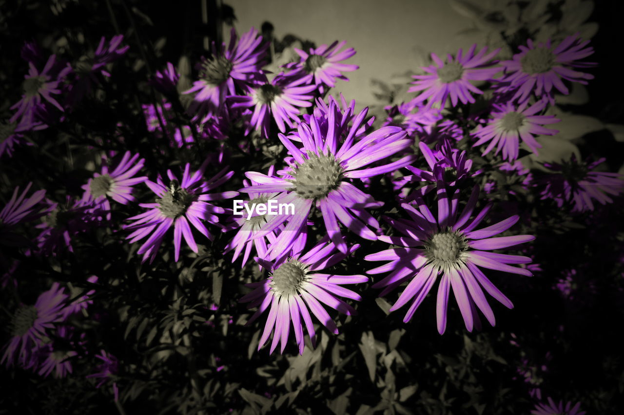 flower, flowering plant, freshness, plant, beauty in nature, fragility, petal, vulnerability, inflorescence, flower head, growth, close-up, no people, nature, purple, selective focus, outdoors, botany, day, focus on foreground, pollen