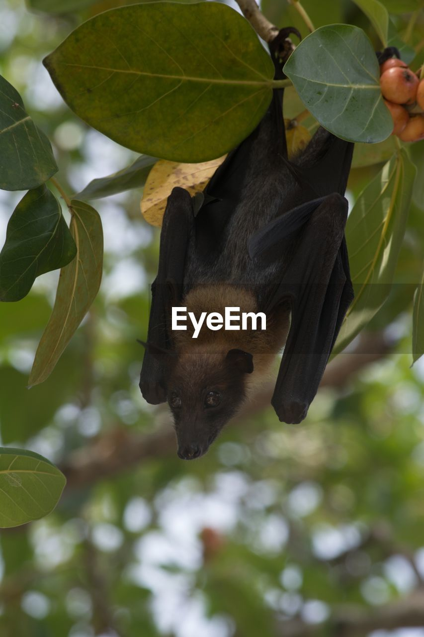one animal, animal themes, animals in the wild, bird, animal wildlife, leaf, tree, outdoors, focus on foreground, day, nature, no people, close-up, bat - animal