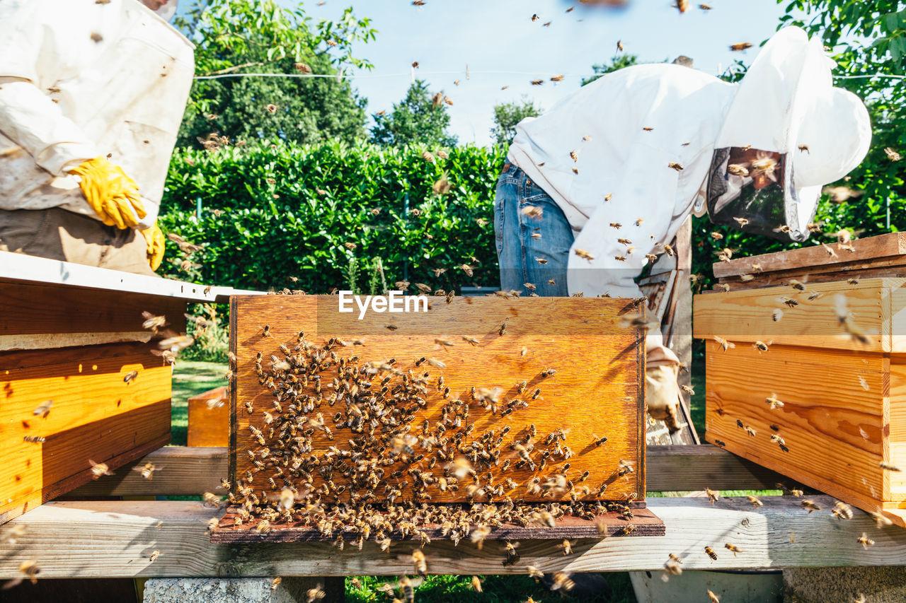 Beekeepers Working At Beehives