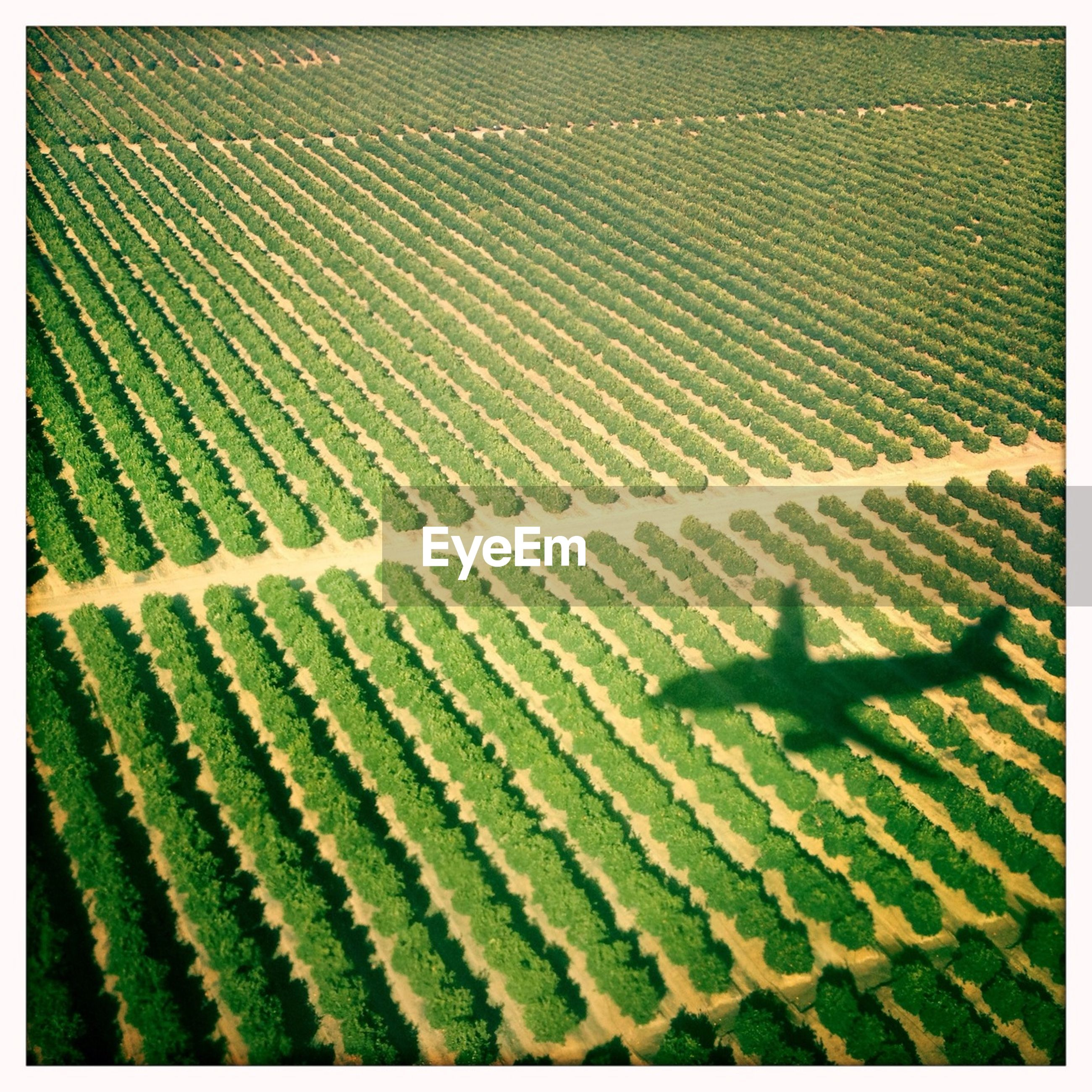 Full frame shot of farm with airplane shadow